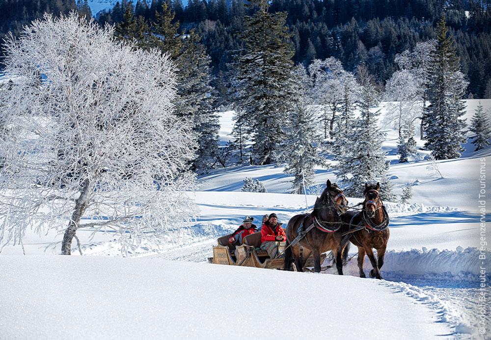 Pferdeschlittenfahrt durch den Schnee
