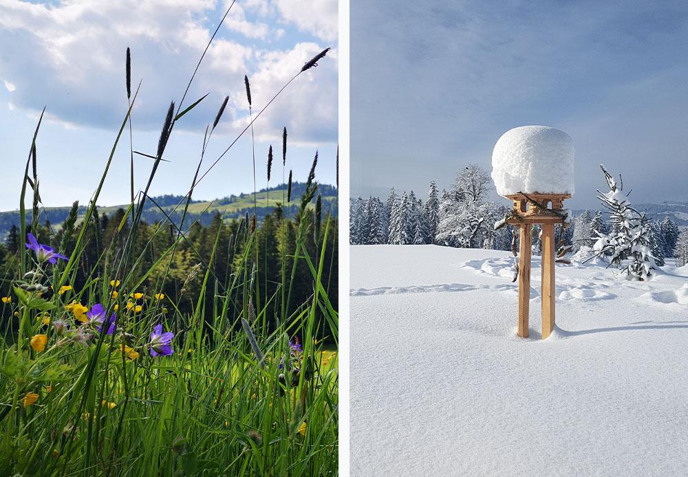 Naturschutzgebiet im Winter und Sommer