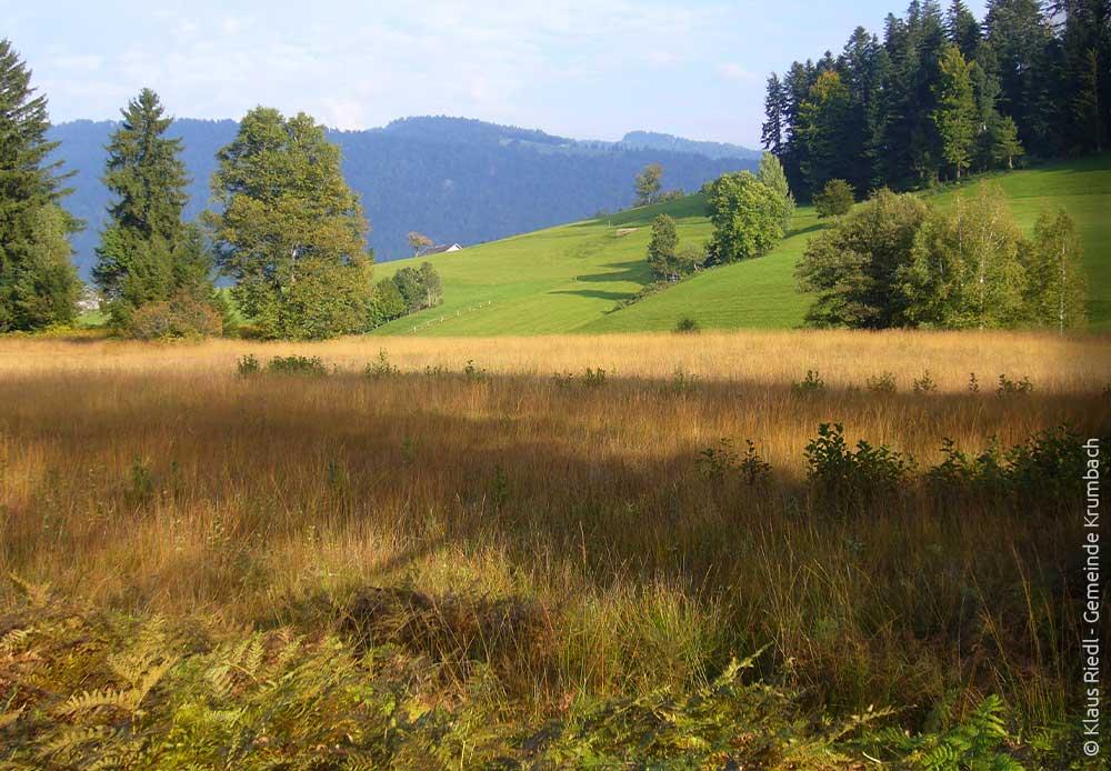 Moore Krumbach im Bregenzerwald